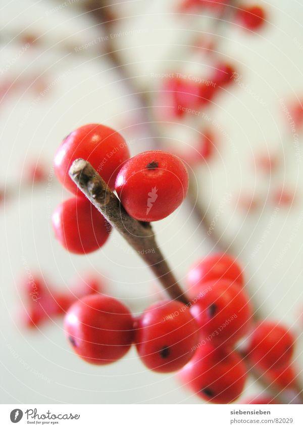 Rundlich Natur Baum Pflanze rot Farbe Umwelt Garten Park Frucht Kreis rund Ast Punkt Kugel Blumenstrauß Zweig