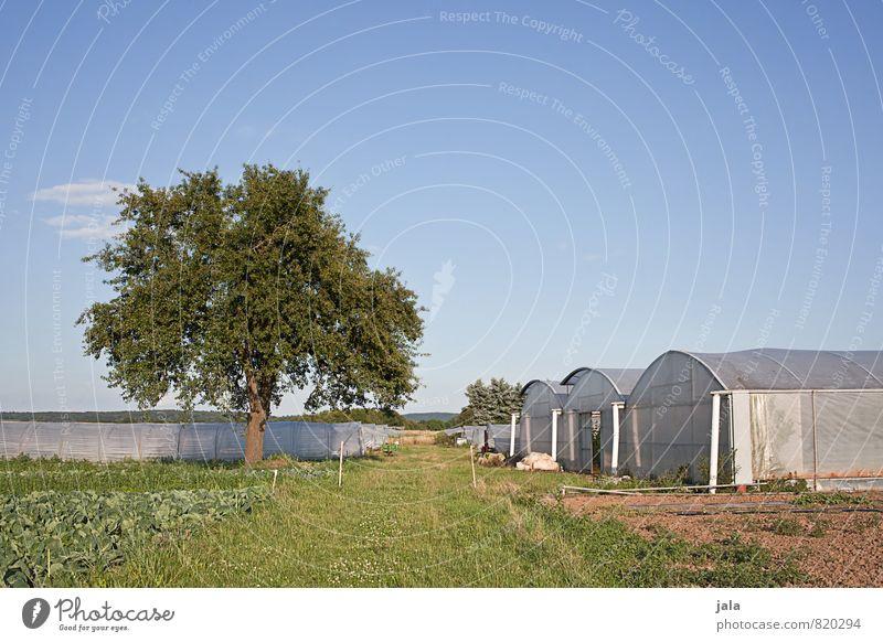 landwirtschaft Arbeit & Erwerbstätigkeit Gartenarbeit Arbeitsplatz Landwirtschaft Forstwirtschaft Umwelt Natur Landschaft Himmel Sommer Schönes Wetter Pflanze