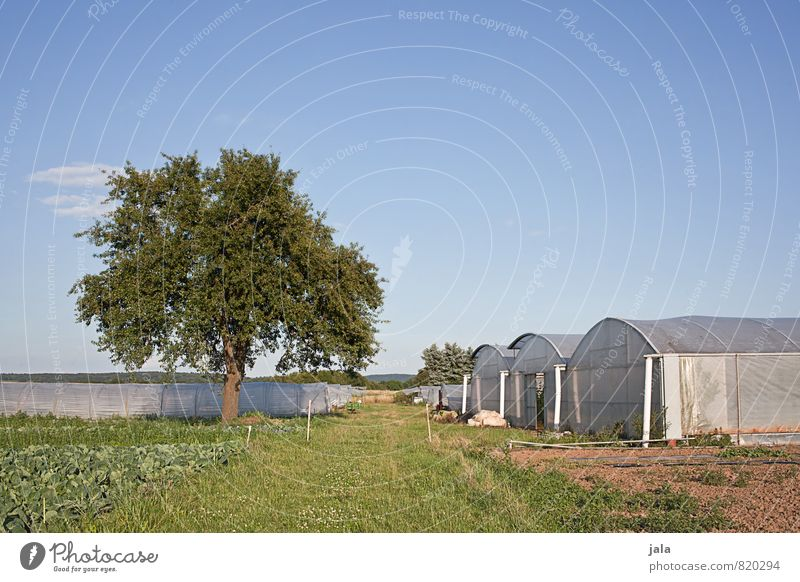 landwirtschaft Himmel Natur Pflanze Sommer Baum Landschaft Umwelt Gras natürlich Arbeit & Erwerbstätigkeit Feld groß Schönes Wetter Landwirtschaft Bauwerk