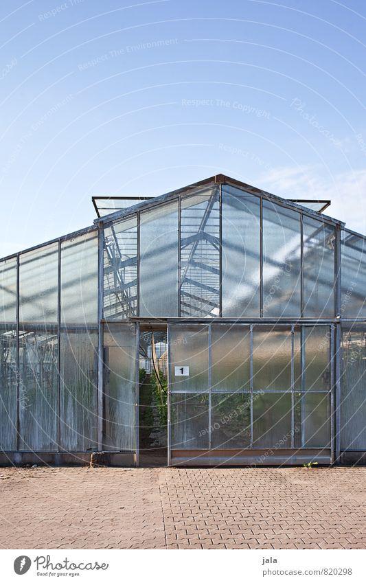 gewächshaus Arbeit & Erwerbstätigkeit Gartenarbeit Arbeitsplatz Landwirtschaft Forstwirtschaft Himmel Bauwerk Gebäude Gewächshaus Fenster Tür ästhetisch groß