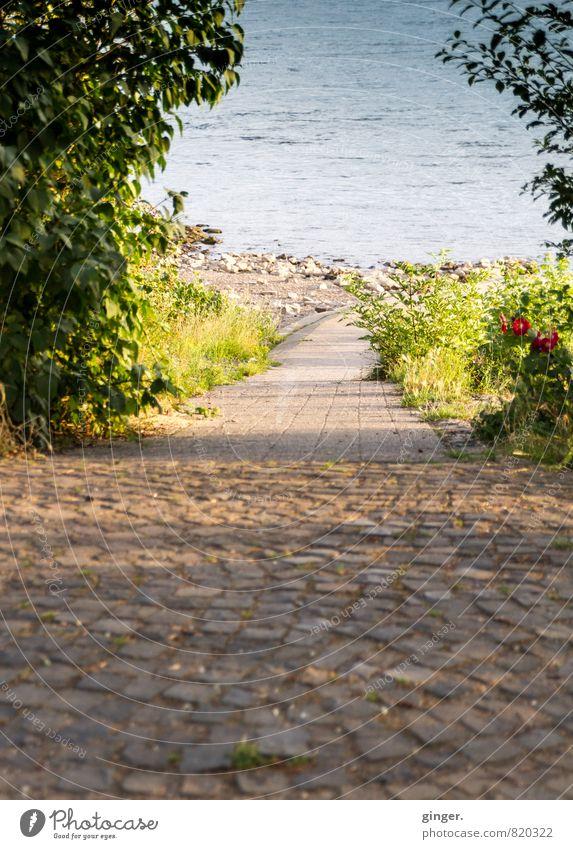 Geht's da zum Schatz der Nibelungen? Natur blau Pflanze grün Wasser Sommer Blume ruhig Blatt Umwelt Wärme Gras Wege & Pfade braun Wellen Sträucher