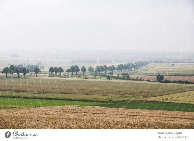 in the middle of nowhere Landschaft Wolkenloser Himmel Herbst Nebel Feld Verkehrswege Straßenverkehr Autofahren Wege & Pfade Allee trist Unendlichkeit Ferne