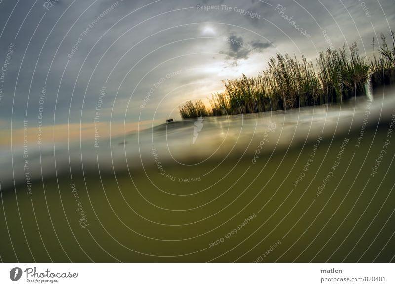 Bodden Natur Landschaft Pflanze Wasser Himmel Wolken Sonnenaufgang Sonnenuntergang Wetter schlechtes Wetter Gras Ostsee braun grau grün orange trüb Oderhaf