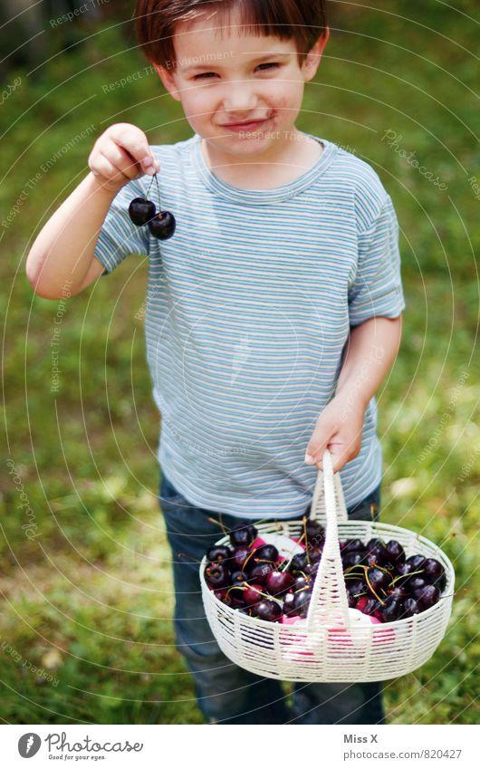 Naschkatze Lebensmittel Frucht Ernährung Essen Picknick Bioprodukte Garten Mensch Kind Kleinkind Mädchen Junge Kindheit 1 1-3 Jahre 3-8 Jahre Sommer Lächeln