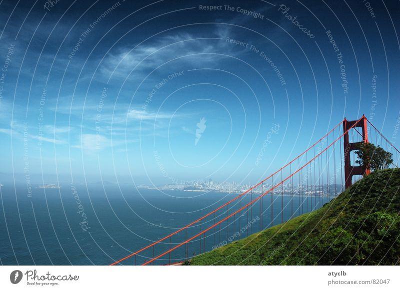Tree hiding the Bridge San Francisco Wolken Baum rot Golden Gate Bridge Kalifornien Himmel Brücke USA