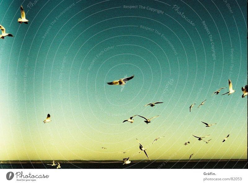Kleine Möwe... Wasser Himmel Sonne Meer Ferne Vogel fliegen Horizont Flügel Schwarm Xpro