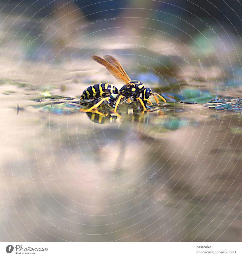 teichträume | schwimmflügelchen Urelemente Wasser Sommer Pflanze Garten Teich Tier Wespen Feldwespe 1 trinken Farbfoto Außenaufnahme Nahaufnahme Makroaufnahme