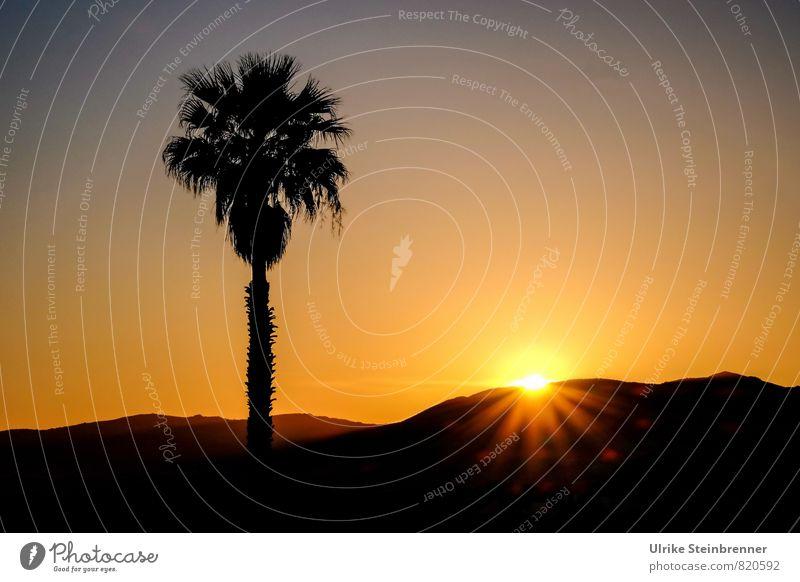 Wohlfühloase | Meine! Natur Ferien & Urlaub & Reisen Pflanze schön Baum Landschaft schwarz Umwelt Wärme Gefühle natürlich Stimmung Horizont glänzend orange
