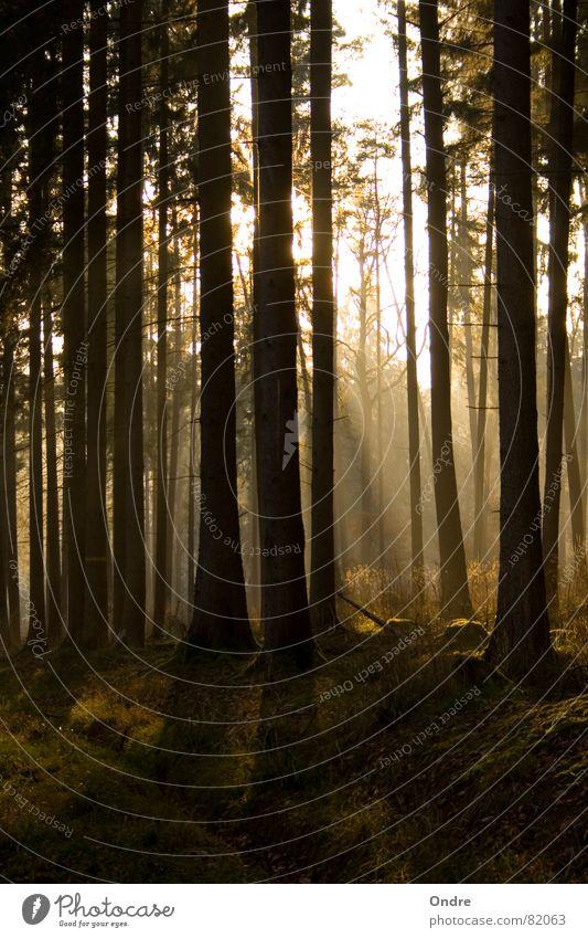 Wald Baum ruhig Wachstum Frieden Reifezeit
