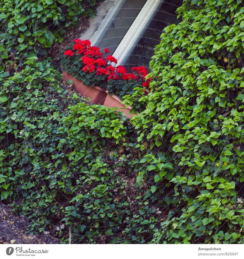 ::14-19:: Ferien & Urlaub & Reisen Ausflug Sommer Sommerurlaub Häusliches Leben Wohnung Haus Traumhaus Garten Umwelt Natur Pflanze Blume Efeu Topfpflanze Hütte