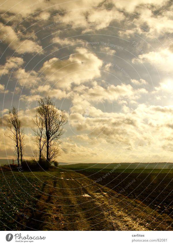 Deutschland - ein Wintermärchen ? Wolken Baum grün Feld braun Horizont ruhig Fluchtpunkt Landwirtschaft schweigen Gelassenheit Wetter Himmel blau Erde