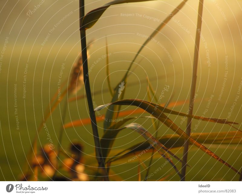 Abendnebel Gesundheit Alternativmedizin ruhig Meditation Ferien & Urlaub & Reisen Ferne Freiheit Natur Landschaft Pflanze Herbst Nebel Gras Blatt Grünpflanze