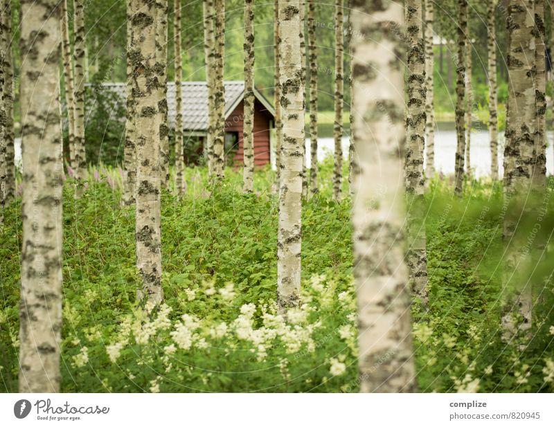 Birkenwald & Sauna Erholung Schwimmen & Baden Ferien & Urlaub & Reisen Sommer Sommerurlaub Natur Wiese Wald Seeufer Teich Haus Hütte Häusliches Leben grün ruhig