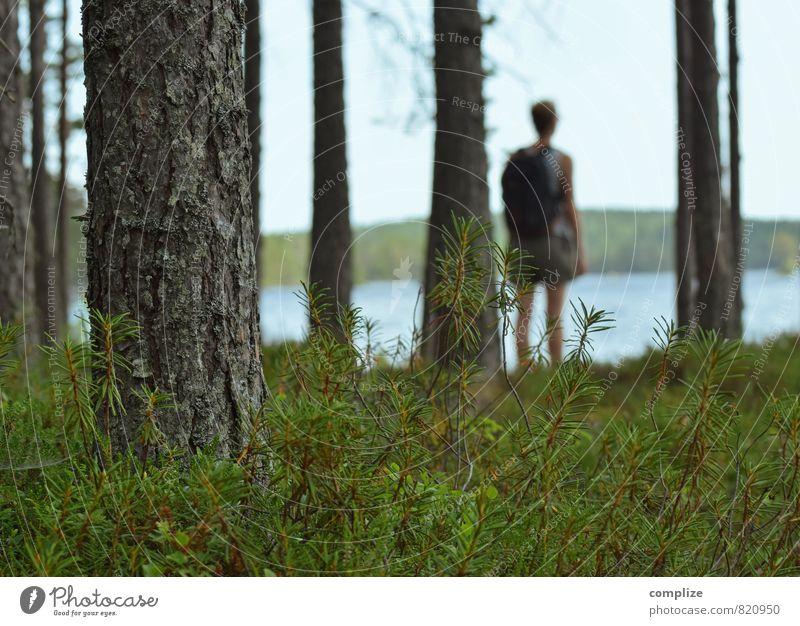 zum See Frau Natur Ferien & Urlaub & Reisen Pflanze Sommer Baum Erholung Landschaft Ferne Wald Umwelt Erwachsene Freiheit gehen Horizont