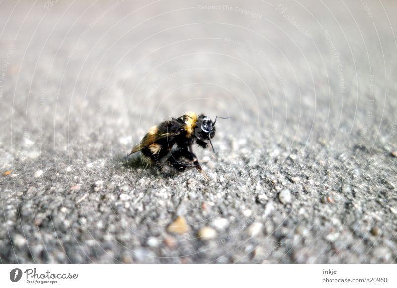 burnout alt Erholung Tier Leben Straße Senior Gefühle Wege & Pfade Tod klein Wildtier authentisch kaputt Wandel & Veränderung Vergänglichkeit Pause