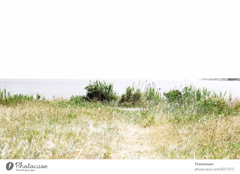 The long way home. Umwelt Natur Landschaft Pflanze Urelemente Sand Wasser Himmel Sommer Schönes Wetter Nordsee Dänemark Wege & Pfade Blick warten ästhetisch
