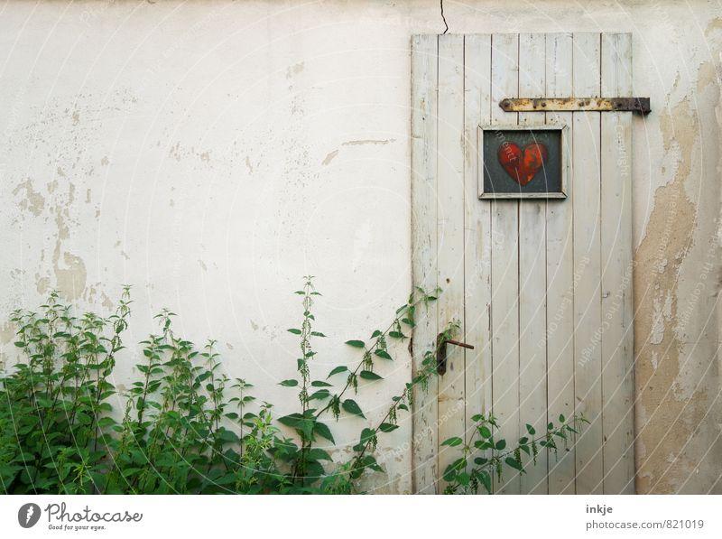 Herzensangelegenheit alt Pflanze grün weiß Sommer rot Umwelt Wand Frühling Mauer Garten Freizeit & Hobby Fassade Lifestyle Häusliches Leben authentisch