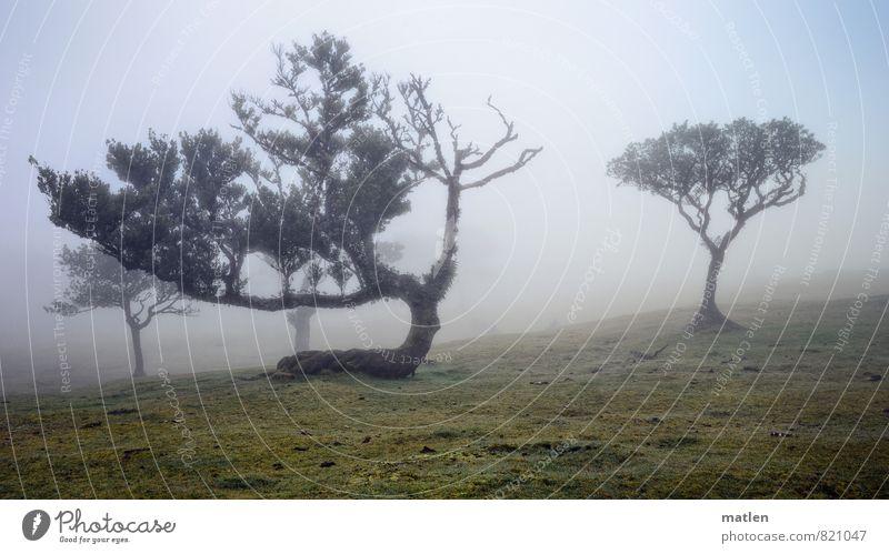 buckle Landschaft Pflanze Himmel Wolken Frühling Wetter schlechtes Wetter Nebel Baum Gras Moos Wiese Menschenleer braun grau grün weiß geheimnisvoll Farbfoto