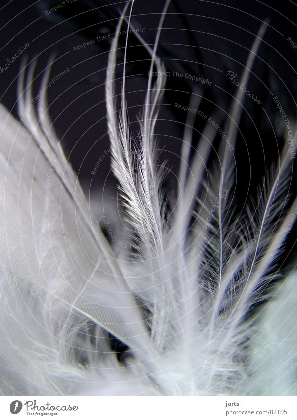 Federtanz Vogel weich zart fein kuschlig sensibel federartig
