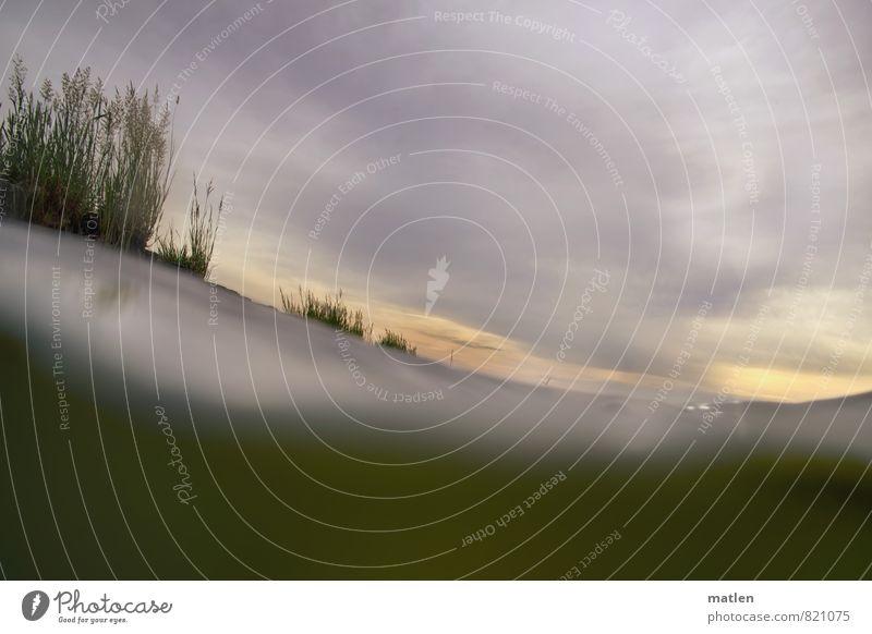 Wasserpflanzen Landschaft Pflanze Himmel Wolken Sonnenaufgang Sonnenuntergang Gras Wellen Ostsee grau grün weiß Bewegung Vorpommersche Boddenlandschaft