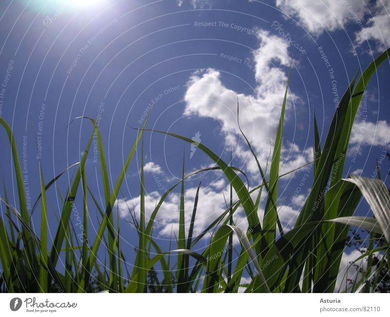 up above Natur Himmel Sonne grün blau Sommer Wolken Beleuchtung