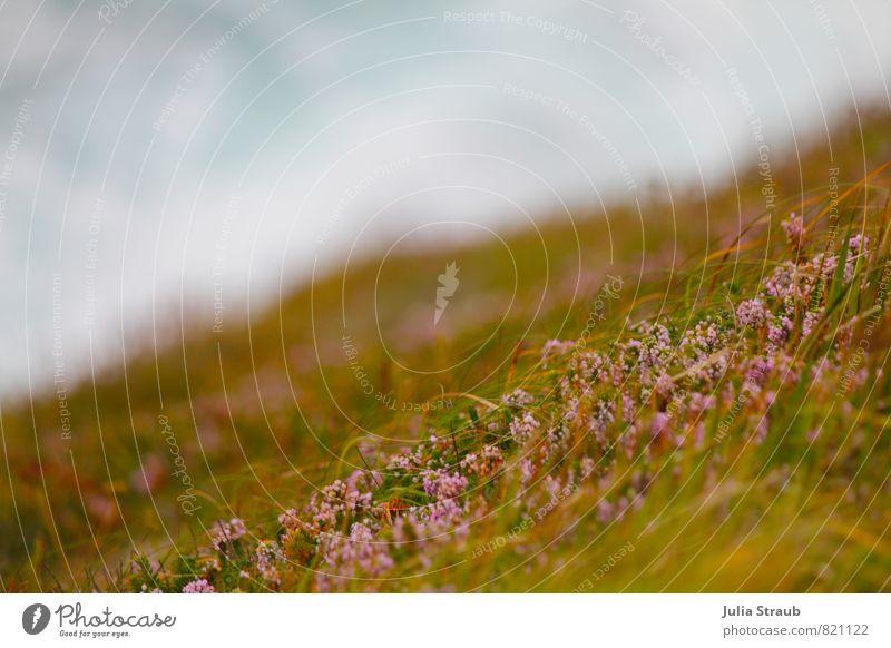 der wind das himmlische kind grün Sommer Meer Umwelt Gras rosa Wellen Klima hell-blau Heidekrautgewächse