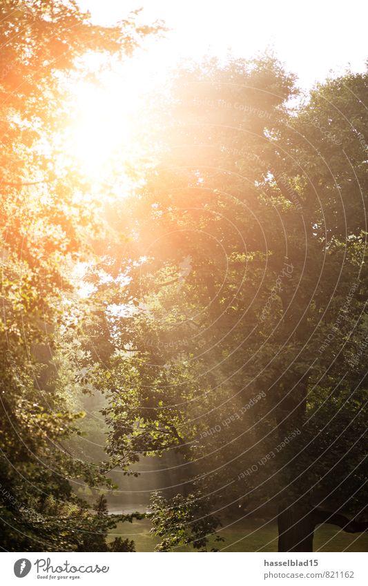 Sunset Ferien & Urlaub & Reisen Pflanze Sommer Sonne Erholung ruhig Freude Ferne Umwelt Wärme Freiheit Glück Gesundheit Park Zufriedenheit Tourismus