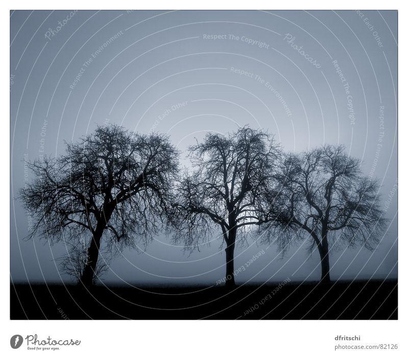 trilogie Nebel Winter laublos Trauer träumen wirklich kalt Verlauf Gegenlicht blenden Denken Platz Jahreszeiten dunkel beruhigend verwandeln Vergänglichkeit