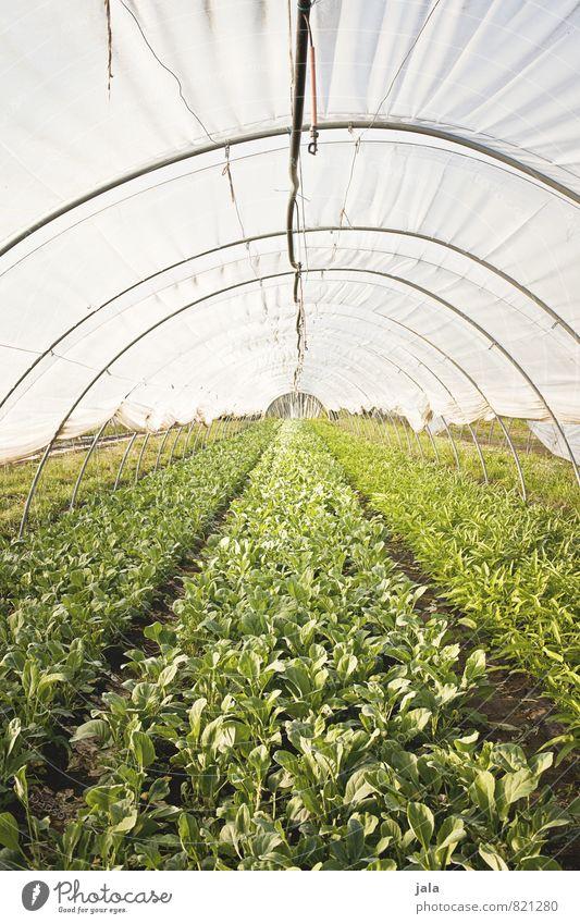 landwirtschaft Natur Pflanze Umwelt natürlich Gesundheit Arbeit & Erwerbstätigkeit Feld Wachstum frisch ästhetisch Landwirtschaft Bauwerk Unternehmen