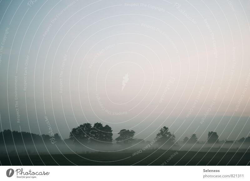 Landromantik Ausflug Ferne Umwelt Natur Landschaft Himmel Wolkenloser Himmel Herbst Wetter Nebel Baum Wiese Feld Menschenleer Einsamkeit Farbfoto