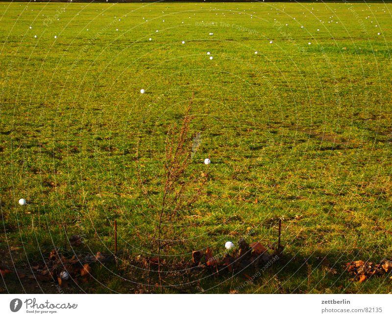Golf Dorf Grundbesitz Gras Wiese grün Grasnarbe Bürgermeister Weide Landwirtschaft Grünfläche Sportrasen Gemeindeland Golfball Dorfwiese Ackerbau Kehren