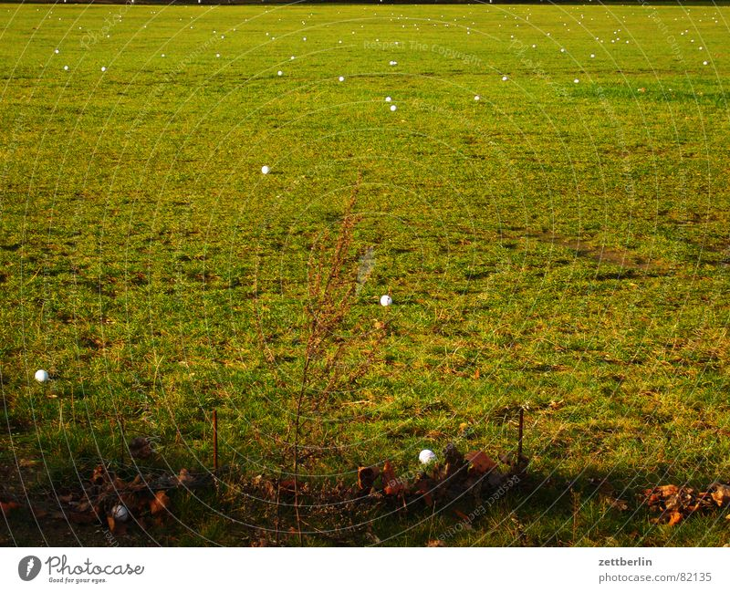 Golf grün Wiese Gras Spielen Erde Landwirtschaft Weide Dorf Ball Sportrasen Grundbesitz Ackerbau Golf Ballsport Grasnarbe Kehren