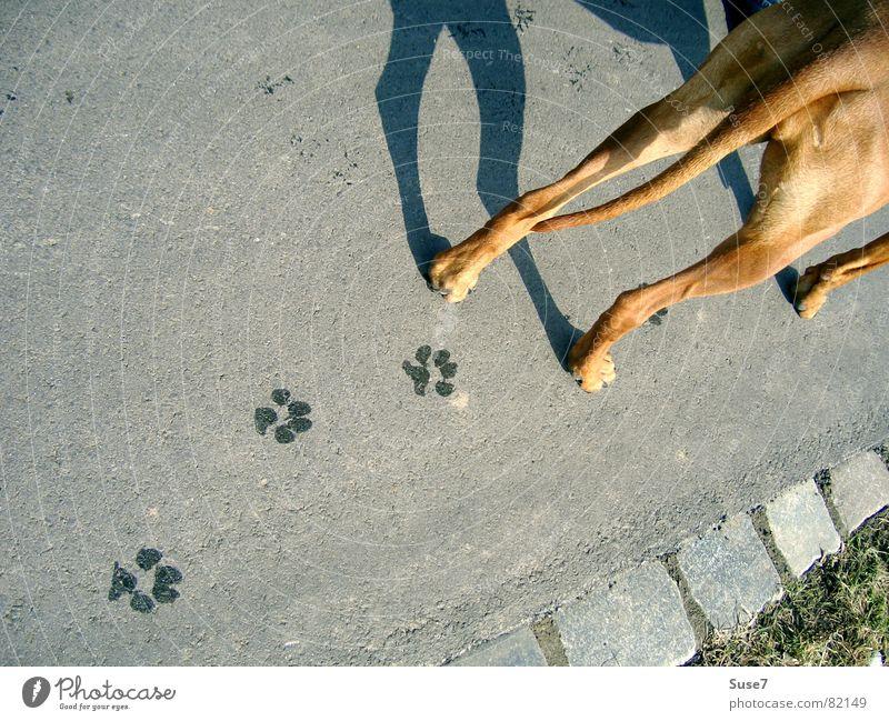 Spuren Hund Fußspur Asphalt Pfote Säugetier Vergänglichkeit tapsen Schatten Hinterteil Wege & Pfade Perspektive verrückt Außenaufnahme Straßenhund