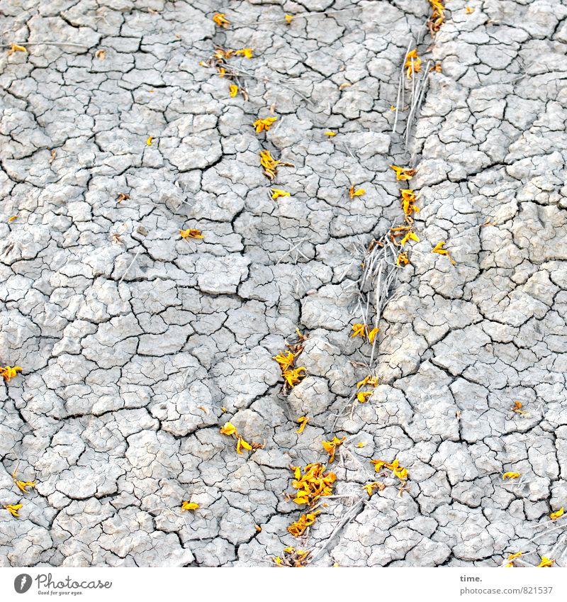 Regenunwahrscheinlichkeit Umwelt Natur Erde Sand Sommer Schönes Wetter Wärme Dürre Pflanze Blüte Wildpflanze trist trocken unten Tapferkeit Optimismus