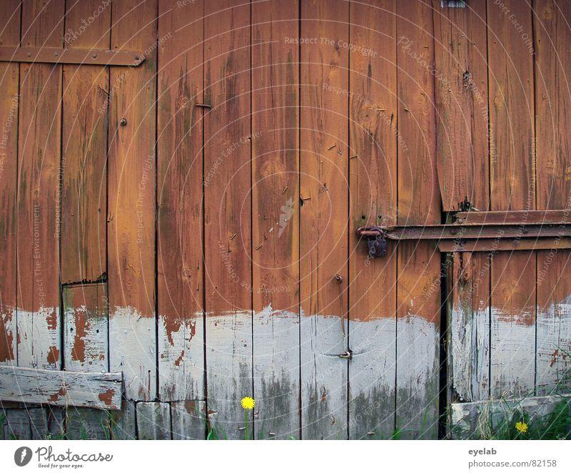 Love Shack Wand Holz rot Insolvenz Stall Landwirtschaft Verfall grau braun Sommer Feld Blume Holzmehl Rust verfallen liebesnest niedergand latch shack maturity