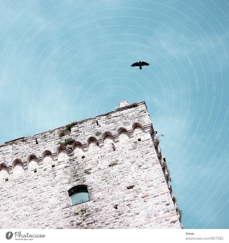 PISA-Studie Himmel alt Stadt Wand Architektur Mauer Zeit Stein fliegen Vogel träumen Dekoration & Verzierung Perspektive ästhetisch Turm Vergänglichkeit
