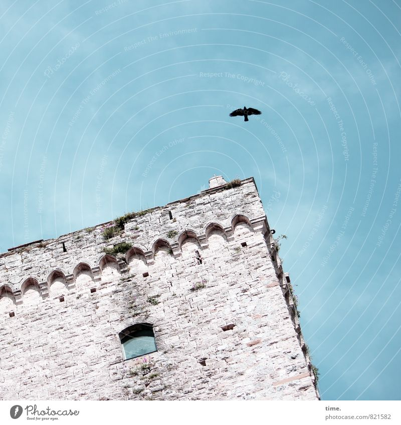 PISA-Studie Himmel Siena Turm Bauwerk Architektur Mauer Wand Sehenswürdigkeit Vogel Krähe Dekoration & Verzierung Stein fliegen alt historisch ästhetisch