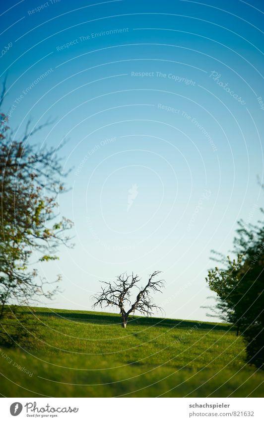 halb ganz halb Natur Landschaft Tier Himmel Wolkenloser Himmel Frühling Schönes Wetter Pflanze Baum Wiese Hügel alt blau grün Vergänglichkeit Farbfoto