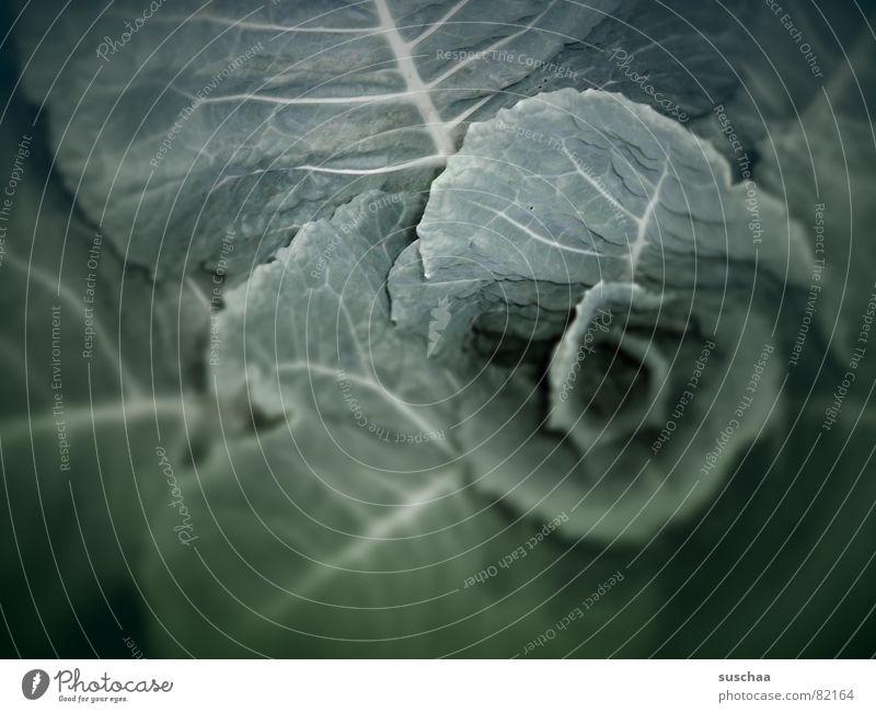 .. verschwommener kohl ... Kohl Grünkohl Kohlblätter Stengel grün Faser frisch Gesundheit ungesund Pflanze Leben pflanzlich Gemüsebeet Gemüsemarkt