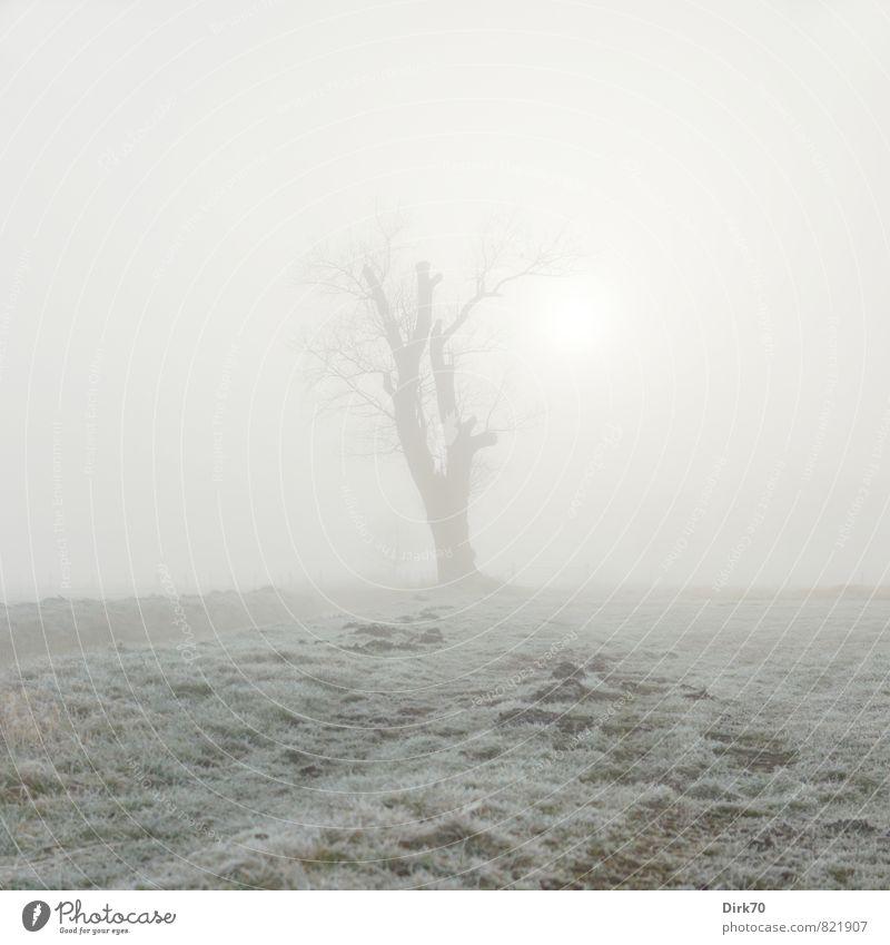 Caspar David Friedrich grüßt von ferne grün weiß Sonne Baum Einsamkeit Winter kalt Traurigkeit Wiese Gras grau braun träumen Feld Nebel leuchten