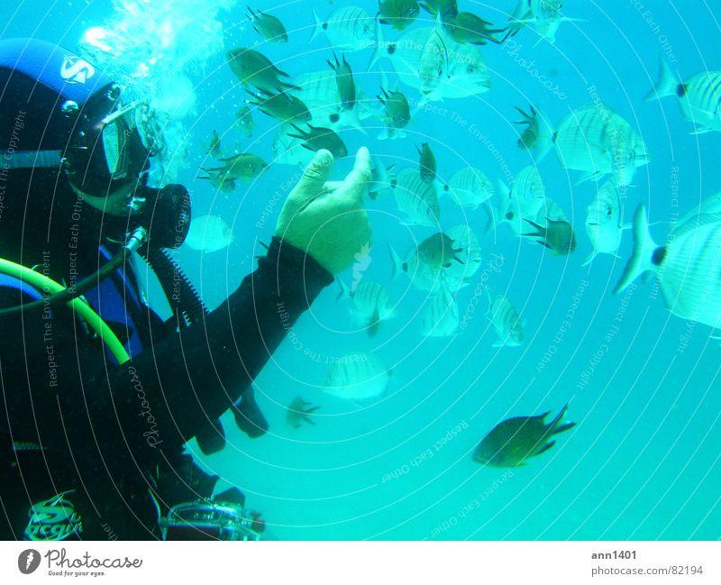 under the sea 1 Luftblase Taucher tauchen Meer Unterwasseraufnahme Wasser Fisch