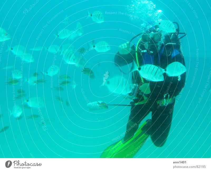 Under the sea 2 Taucher tauchen Meer Unterwasseraufnahme Luftblase Wasser Fisch