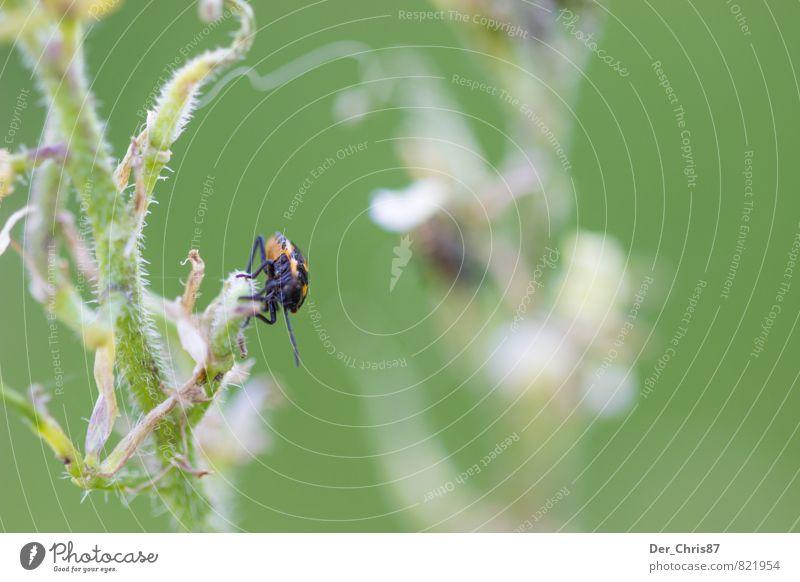 Doppelt aber unscharf Natur Pflanze Tier Umwelt Glück Zufriedenheit Wildtier sitzen warten beobachten Freundlichkeit Abenteuer Hoffnung hängen krabbeln Käfer