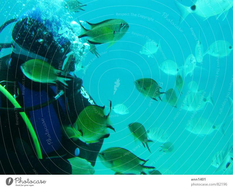 Under the sea 3 Taucher tauchen Meer Unterwasseraufnahme Luftblase Wasser Fisch