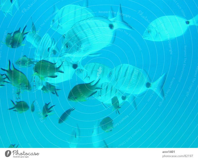 Under the sea 4 Wasser Meer Fisch tauchen Luftblase Unterwasseraufnahme