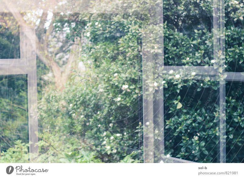Wintergarten harmonisch Wohlgefühl Zufriedenheit Sinnesorgane ruhig Meditation Sommer Häusliches Leben Haus Traumhaus Garten Raum Gewächshaus Umwelt Natur Baum