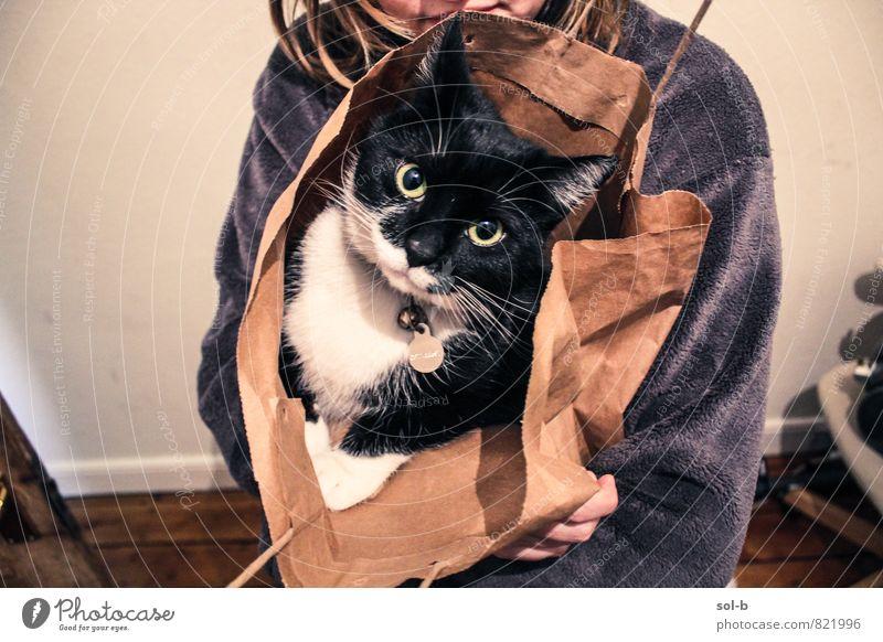Katze Mensch Jugendliche Junge Frau Tier schwarz feminin Liebe lustig Spielen Freundschaft Zusammensein Häusliches Leben verrückt niedlich Warmherzigkeit