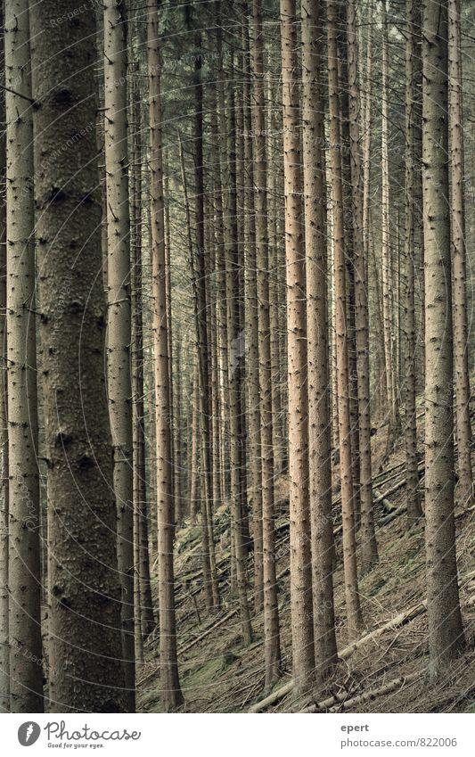 Baumcode Natur Pflanze Wald Umwelt Holz Linie Ordnung stehen Perspektive Streifen standhaft gleich Ordnungsliebe