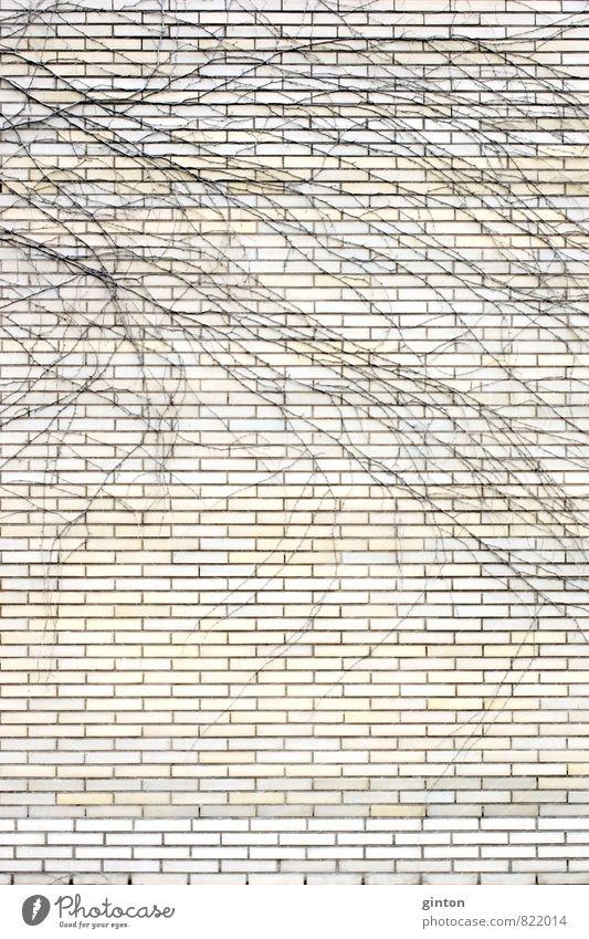 Verzweigungen auf dem Klinker Natur Pflanze Dürre Efeu Haus Bauwerk Gebäude Architektur Mauer Wand Fassade Stein Beton ästhetisch fest braun gelb schwarz weiß
