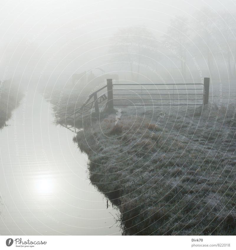 inkje gewidmet: Der untere Teil. blau grün weiß Sonne Baum ruhig Tier Winter kalt Wiese Gras grau braun Feld Nebel Idylle